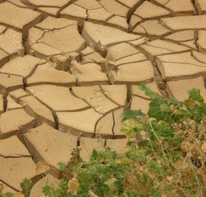 Kerala Drought
