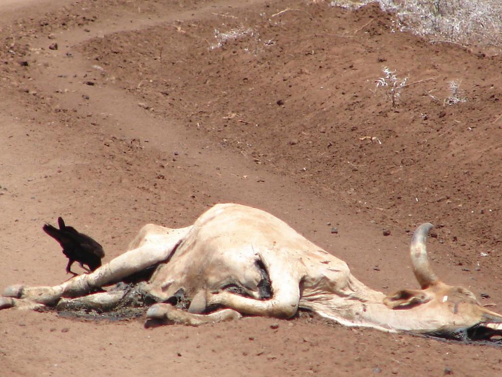drought-death